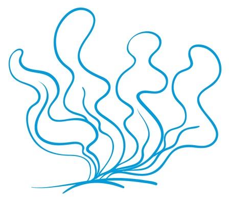 alga marina: ilustración de un boceto de planta de agua bajo el fondo blanco Vectores