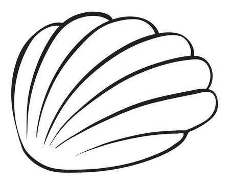 sea shell: illustration of a cockleshell sketch on a white background