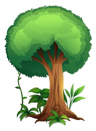 hoog gras: illustratie van een boom op een witte achtergrond