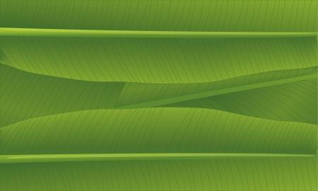 banana leaf: illustration of a banana leaf Illustration