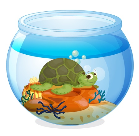 gold fish bowl: illustration of a water bowl and a tortoise on a white background