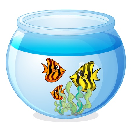 fish bowl: illustration of a water bowl and a fish on a white background