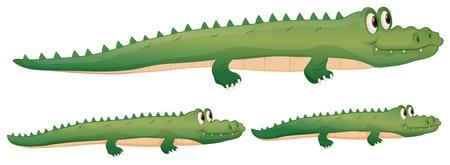alligator eyes: illustration of a crocodile on a white background