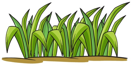 illustration of a grass on a white background Vector