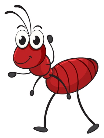 red ant: illustration of an ant on a white background