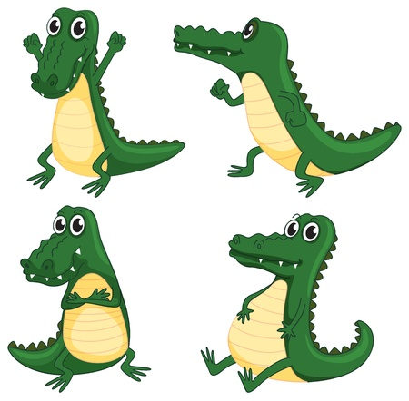 alligator eyes: illustration of crocodiles on a white background