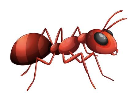 Illustratie van een mier op een witte achtergrond