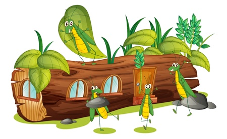 Illustration of grasshoppers and a wood house on a white background Vector