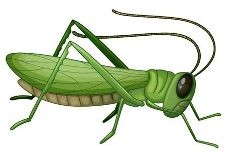 Illustratie van een sprinkhaan op een witte achtergrond