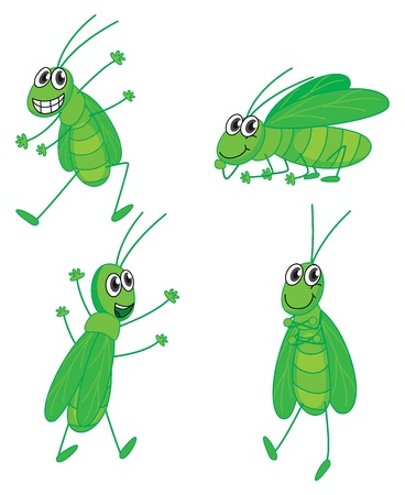Illustration of four grasshoppers on a white background Vector