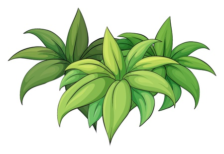 shrubs: Illustration of a plant on a white background Illustration