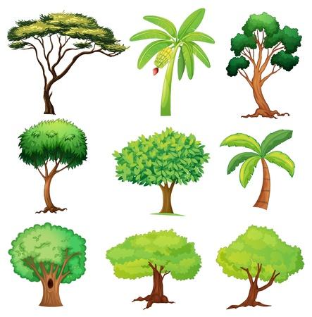 banaan cartoon: Illustratie van diverse bomen op een witte achtergrond Stock Illustratie