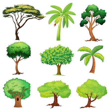 tall tree: Illustration of various trees on a white background