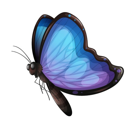 purple butterfly: Illustration of a butterfly on a white background