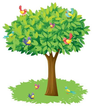 big bird: Illustration of a tree and birds on a white background