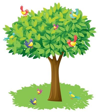 ¡rboles con pajaros: Ilustración de un árbol y los pájaros en un fondo blanco