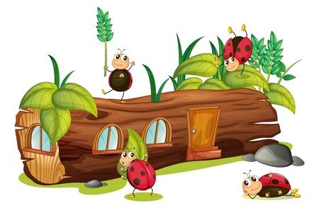 ladybug cartoon: Illustration of ladybugs and a wood house on a white background Illustration