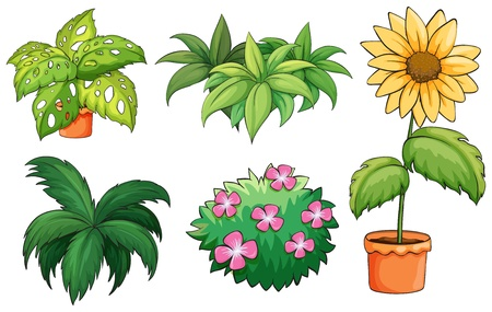 Illustration of flowerpots and plants on a white background Vector