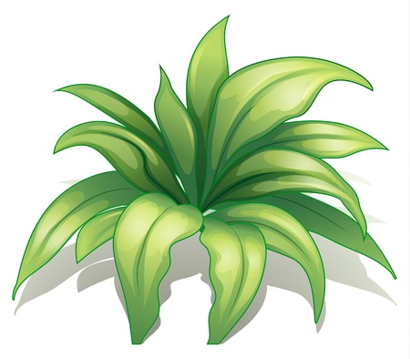 Illustration of a plant on a white background Vector