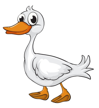 cartoon duck: Illustration of a duck on a white background