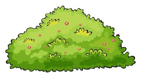 Illustration d'un buisson vert sur un fond blanc Vecteurs