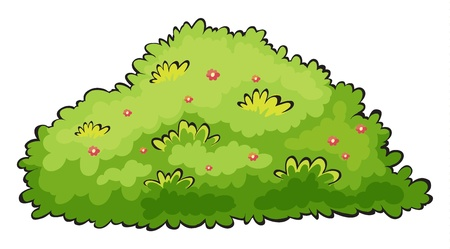 flowers cartoon: Illustration of a green bush on a white background Illustration
