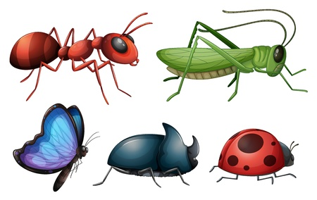 red ant: Illustration of various insects and bugs on a white background
