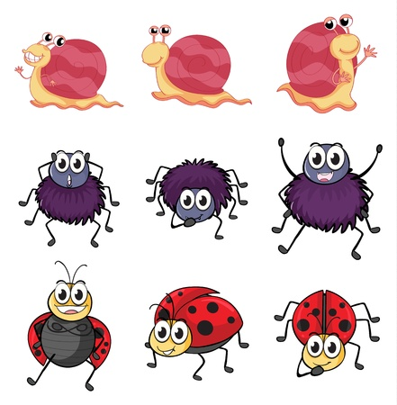 Illustration of a spider, a ladybug and a snail on a white background Stock Vector - 17161572