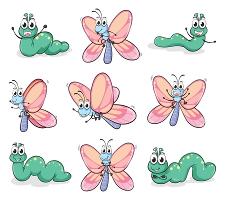 cartoon larva: Illustration of a caterpillar and a butterfly on a white background