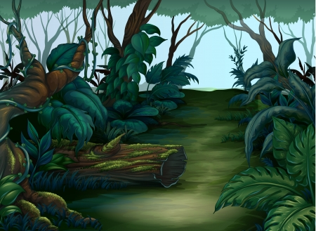 tropical rainforest: Illustration of a clean and green forest