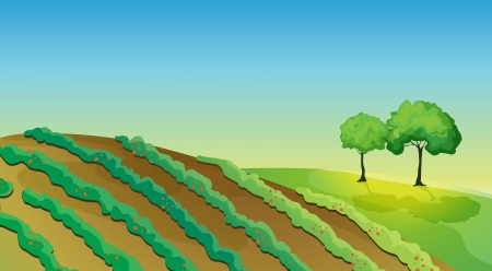Illustration of agricultural plantation with trees Vector