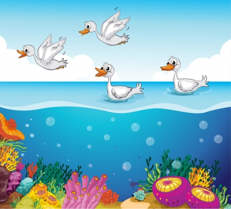 sea weeds: Illustration of ducks looking for foods in the sea