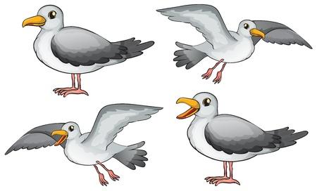 mouettes: Illustration de quatre oiseaux sur un fond blanc