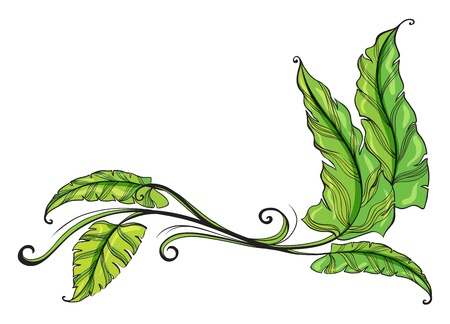 beautify: Illustration of green long leaves on a white background