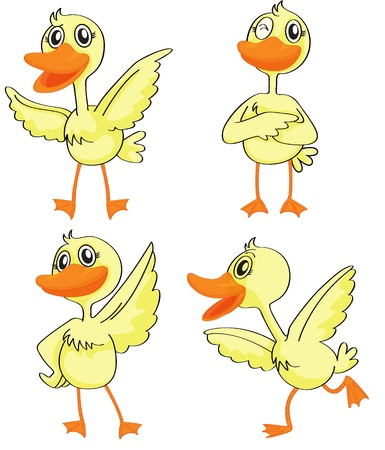 duck feet: Illustration of four ducklings on a white background