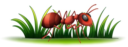 Illustration of an ant on a white background Stock Vector - 17358253