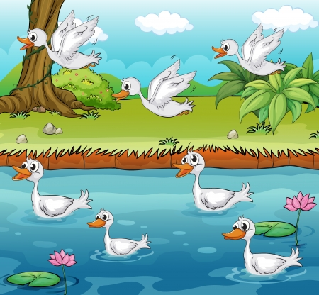 Illustration of swimming and flying ducks on a colorful environment