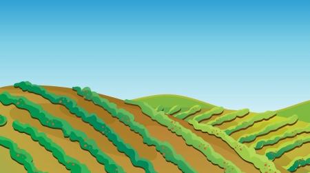fertile: Illustration of a fertile land with growing plants