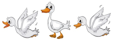 duck feet: Illustration of ducks walking and flying on a white background