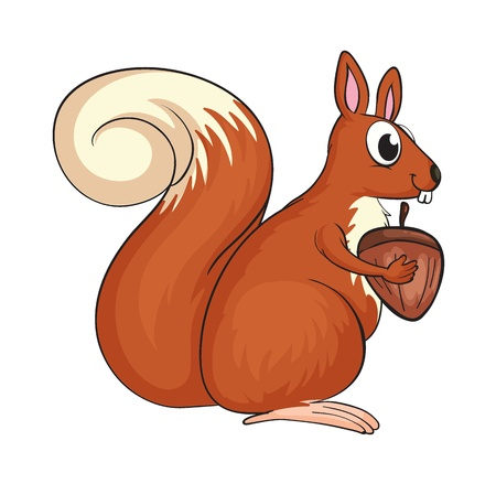 Illustration of a squirrel on a white background Stock Vector - 17383801