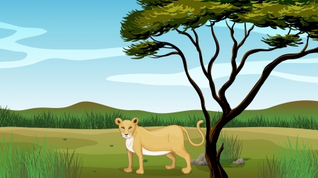 Illustration of a lion in a field Stock Vector - 17410918