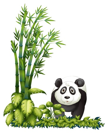 Illustration of a panda on a white background Stock Vector - 17411123