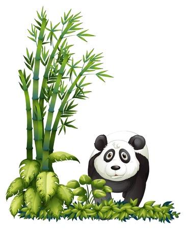 shrubs: Illustration of a panda on a white background
