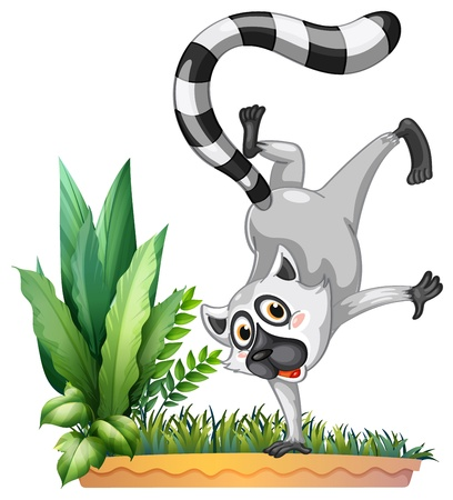 Illustration of a wild lemur on a white background Vector