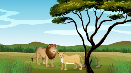 Illustration of a lion and a tiger Vector
