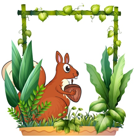Illustration of a squirrel and the nut on a white background Vector