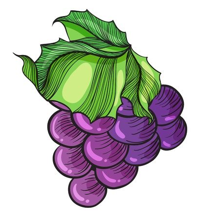 grapes in isolated: Illustration of a luscious grape on a white background Illustration