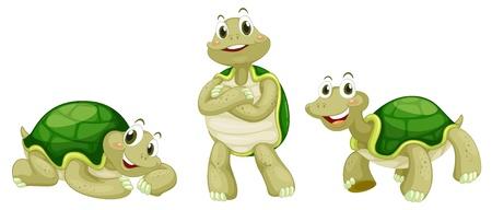 three animals: Illustrazione di tartarughe su uno sfondo bianco Vettoriali