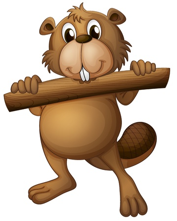 castoro: Illustrazione di un castoro su sfondo bianco