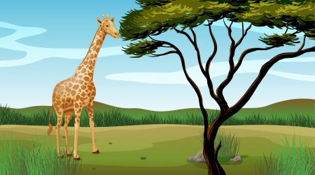 Illustration of a giraffe standing alone Stock Vector - 17443578